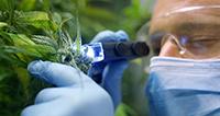 Neue Kurzinformation erschienen: Cannabis als Medizin?